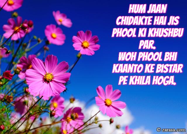 """Phool SHAYARI """"Woh Phool Bhi Kaanto Ke Bistar Pe Khila Hoga"""""""