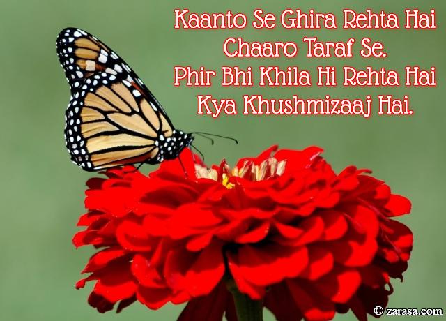 """Phool SHAYARI """"Phir Bhi Khila Hi Rehta Hai Kya Khushmizaaj Hai"""""""