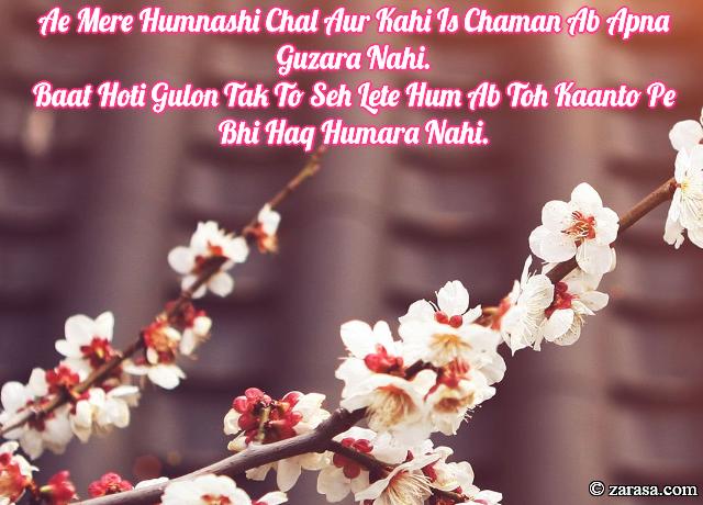 """Phool SHAYARI """"Ab Toh Kaanto Pe Bhi Haq Humara Nahi"""""""