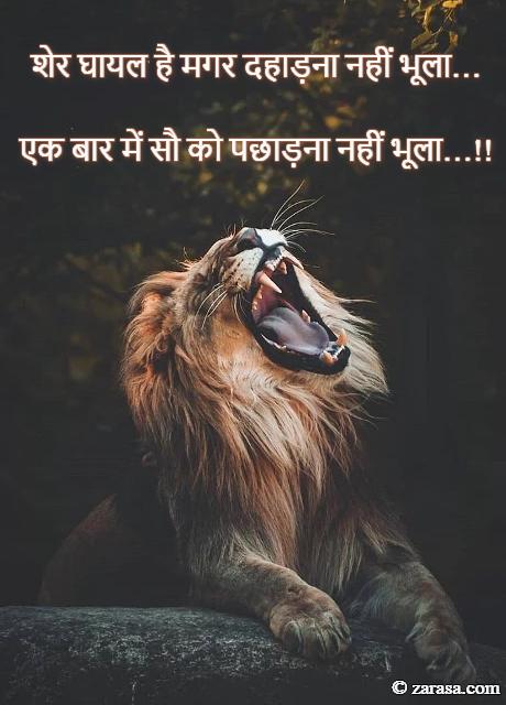 """Attitude Shayari """"शेर घायल है मगर दहाड़ना नहीं भूला…"""""""